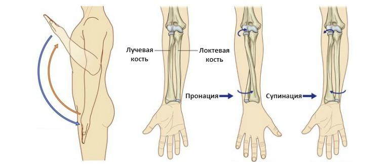 Упражнения для локтевого сустава при артрозе