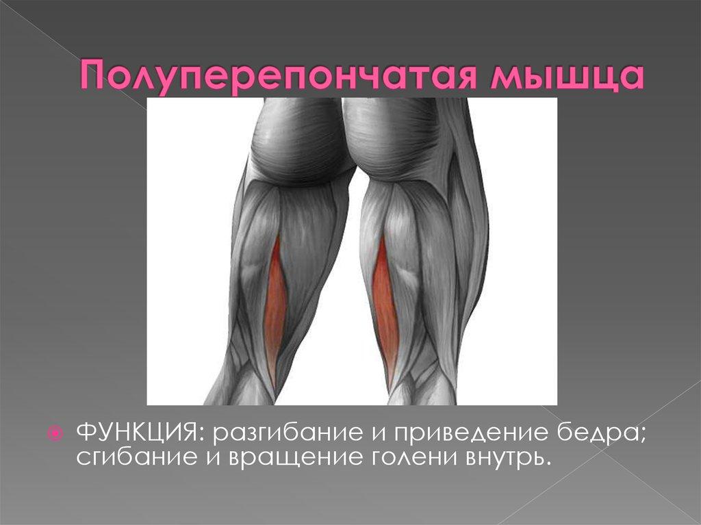 Надрыв мышц задней поверхности бедра