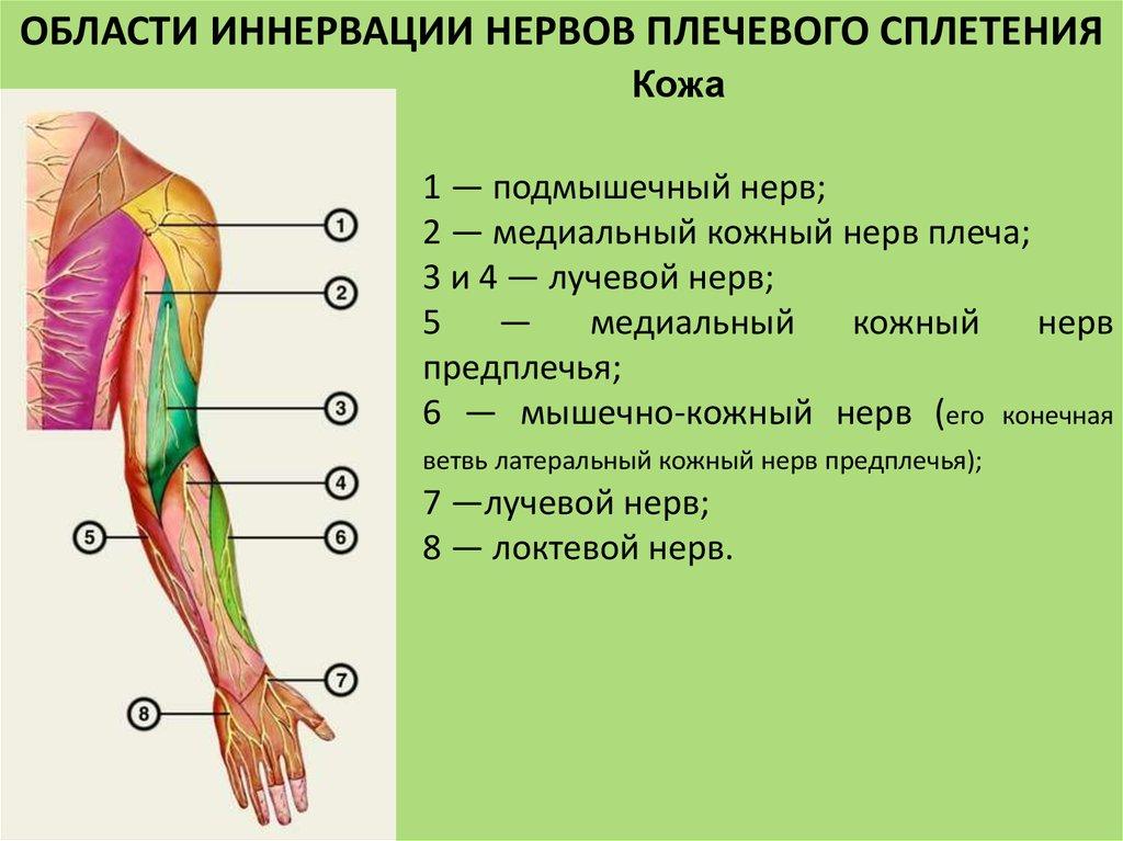 Повреждение подмышечного нерва