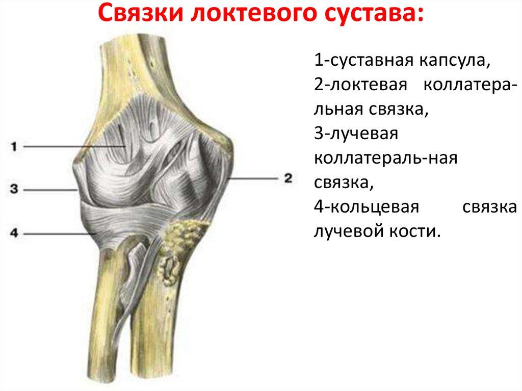 Разрыв связок локтевого сустава