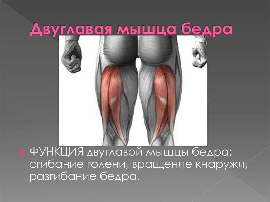 Тендинит мышц задней поверхности бедра